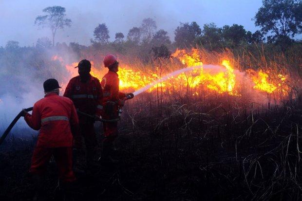 Tim Maggala Agni memadamkan kebakaran lahan gambut di desa Pulau Semambu, Ogan Ilir, Sumatera Selatan, Selasa (6/8/2019). Presiden Joko Widodo menginstruksikan kesejumlah instansi terkait untuk segera mengatasi kebakaran hutan dan lahan yang intensitasnya
