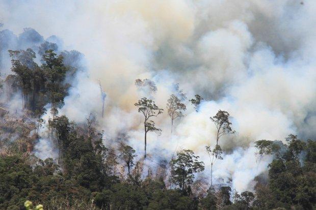 kebakaran hutan dan lahan, kebakaran hutan di kalimantan, kementerian lingkungan hidup