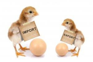 Telaah - Impor Ayam Brasil