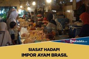 Ayam Impor Brasil