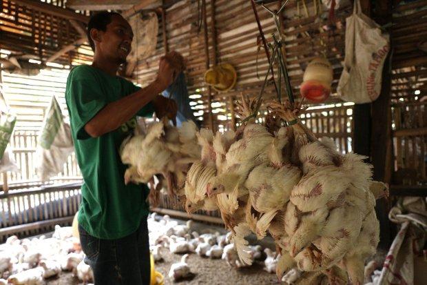 Harga ayam anjlok, 700 peternak unjuk rasa di Kementerian Pertanian
