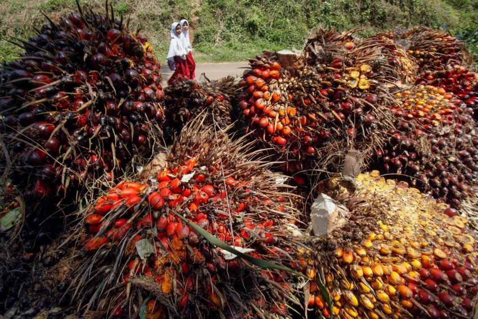 kelapa sawit, sertifikat berkelanjutan, indonesia sustainable palm oil, ispo