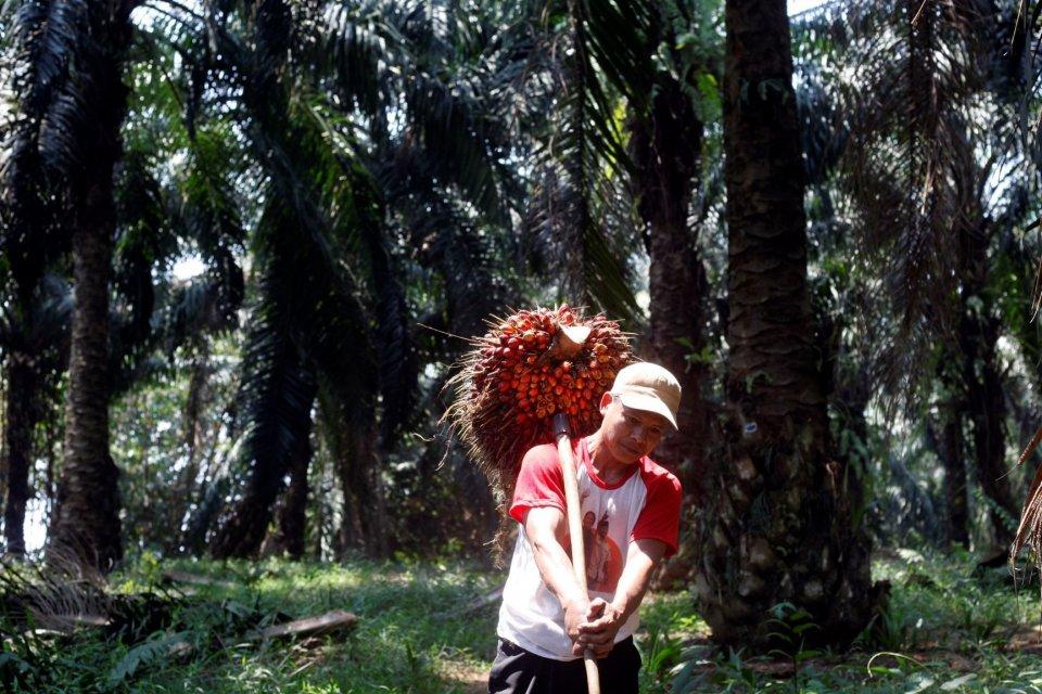 kelapa sawit, biodiesel