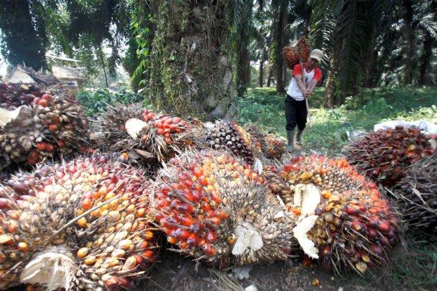 Produksi Minyak Sawit Indonesia