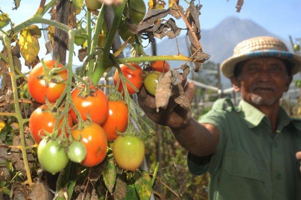 TaniFund, petani, fintech pertanian
