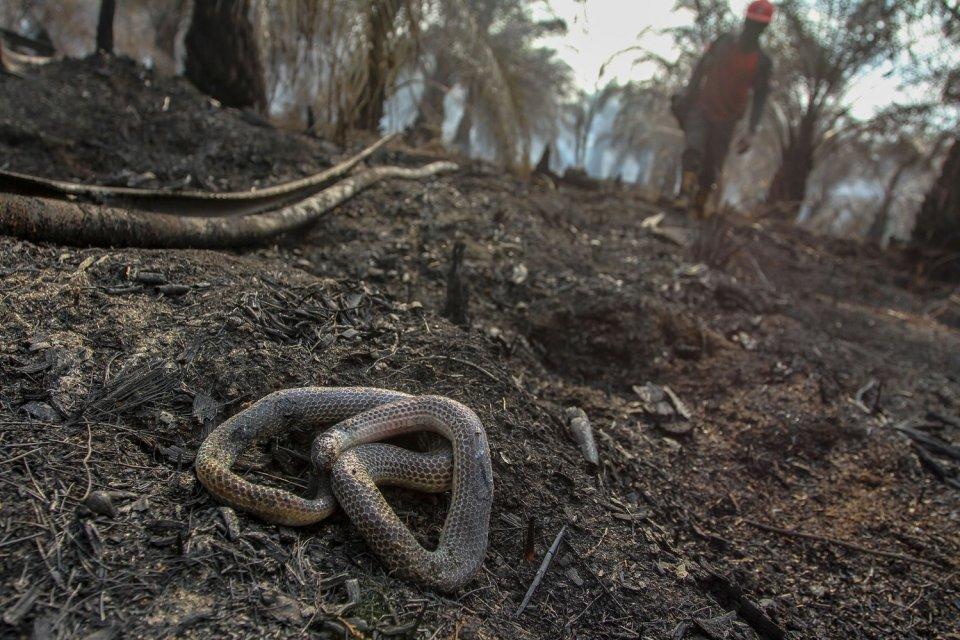 Jokowi, kebakaran hutan, gugatan PK