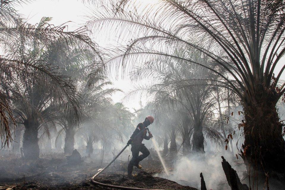 Petugas Manggala Agni Daops Pekanbaru berusaha memadamkan kebakaran lahan gambut di perkebunan sawit milik warga di Kecamatan Rumbai, Pekanbaru, Riau, Rabu (4/9/2019). Satgas Karhutla Riau terus berupaya melakukan pemadaman kebakaran lahan agar tidak sema