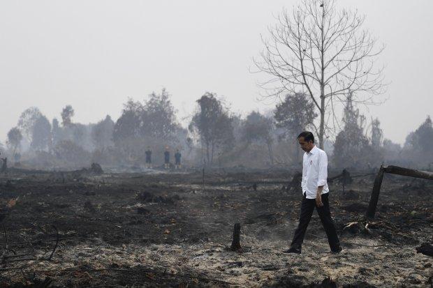 Presiden Joko Widodo meninjau penanganan kebakaran lahan di Desa Merbau, Kecamatan Bunut, Pelalawan, Riau, Selasa (17/9/2019).