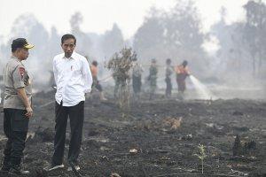 Jokowi Tinjau Karhutla