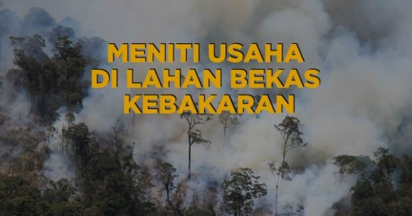 Video: Meniti Usaha di Lahan Bekas Kebakaran Hutan