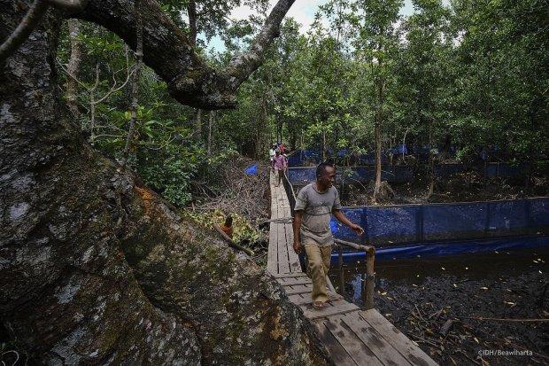 Warga Hutan Desa Bentang Pesisir Padang TIkar, membuat kolam mina hutan budidaya kepiting bakau di area mangrove.