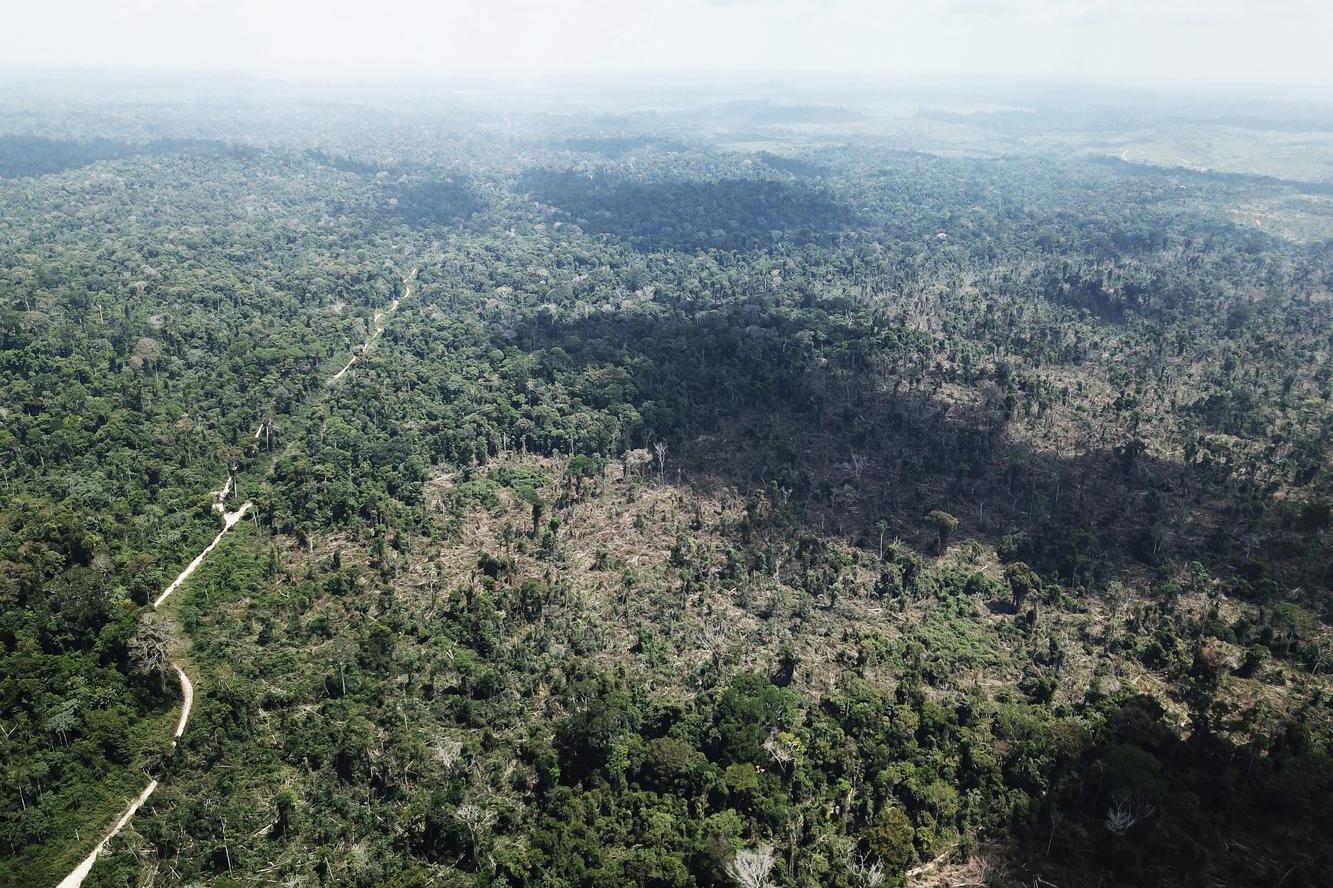 ESG, emisi karbon, lingkungan, big four, bisnis hijau