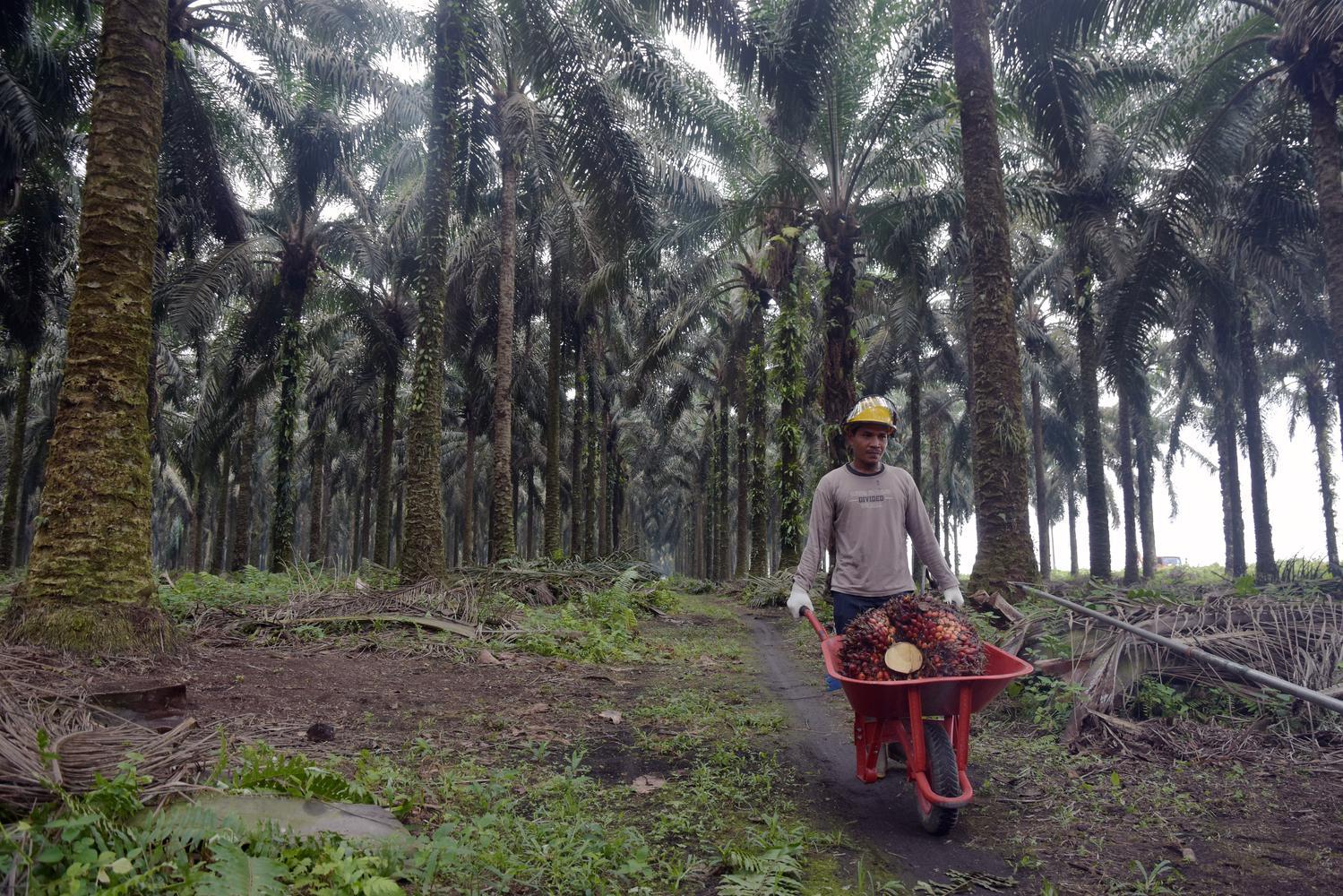 Lantik Direksi Baru, Sri Mulyani Minta BPDPKS Fokus Replanting Sawit.