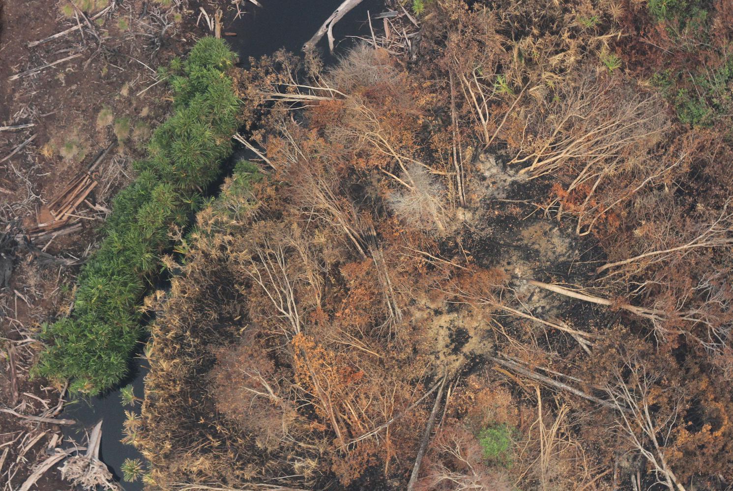 Karhutla Di Taman Nasional Sebangau