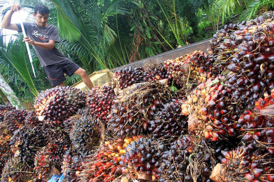 kelapa sawit, virus corona, tiongkok