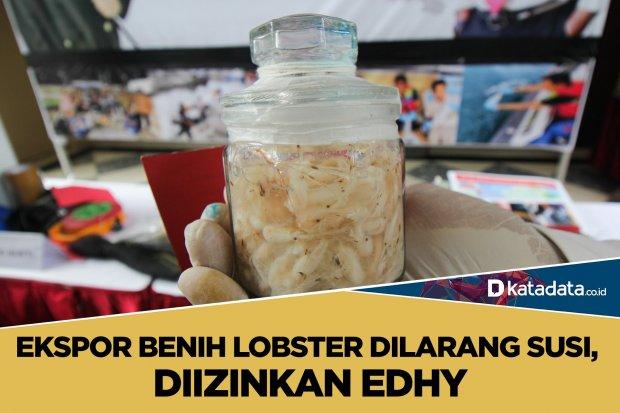 ekspor lobster