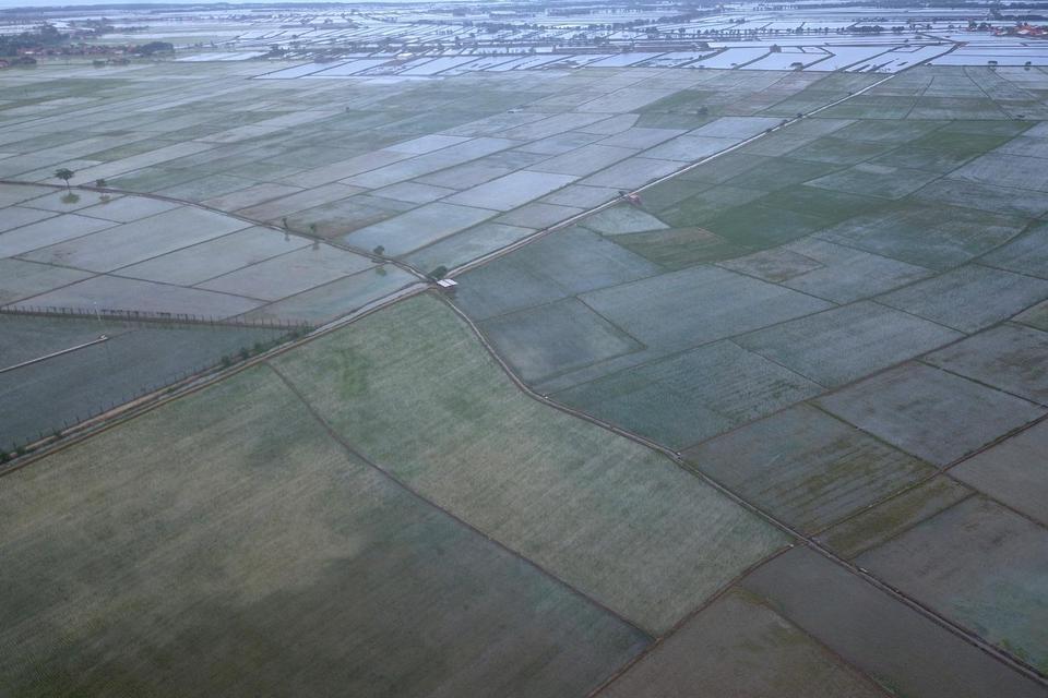 Terlacak Satelit, Luas Lahan Baku Sawah 2019 Bertambah 300 Ribu Hektar.