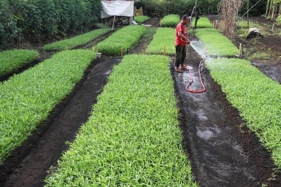lahan pertanian, lahan gambut, kementerian pertanian, kementan, pertanian