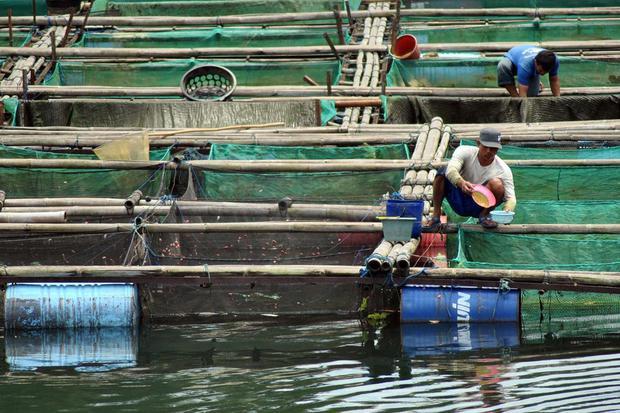pandemi corona, budidaya ikan, kementerian kelautan dan perikanan, produk ikan, virus corona, produksi ikan