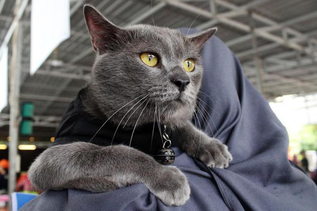 jenis-jenis kucing, jenis kucing