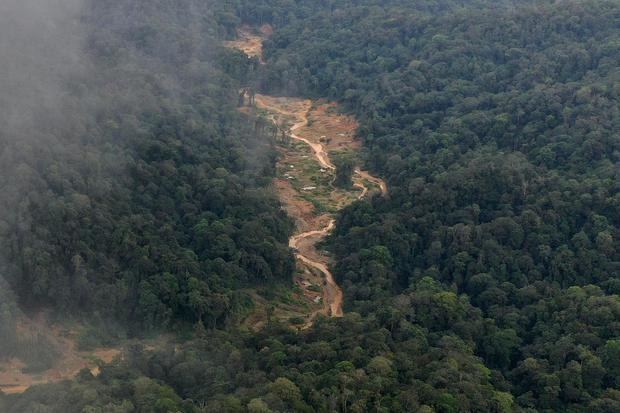 Menteri LHK Target Perpres Perdagangan Karbon Rampung Agustus.