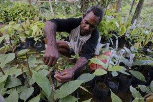 YIDH Papua