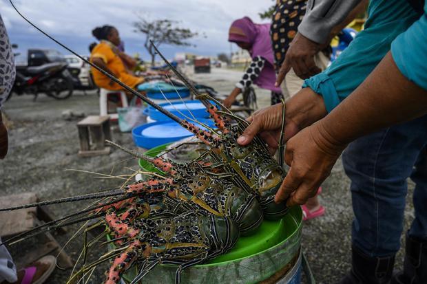 lobster, kppu, ekspor
