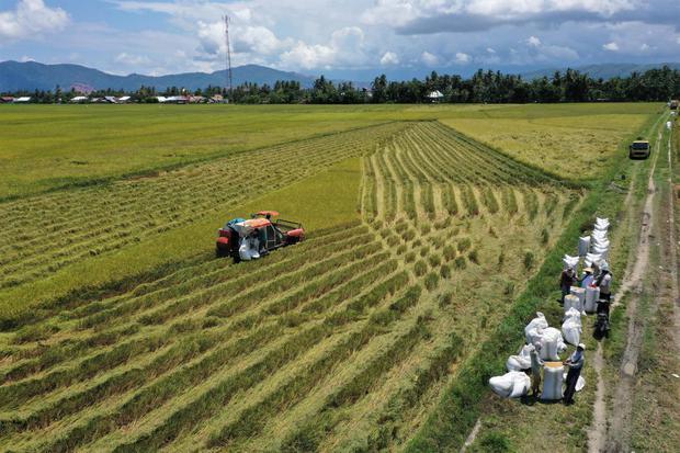 Ilustrasi, petani menggarap sawah. Demi mengantisipasi kekeringan dan krisis pangan Presiden Joko Widodo (Jokowi) minta pembukaan lahan persawahan baru, di antaranya lahan gambut dan lahan BUMN.