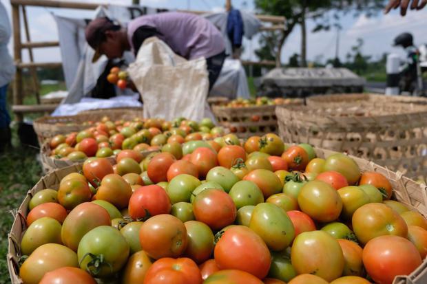 Prouduksi Turun, Kemendag Incar Potensi Ekspor Buah dan Sayur Jepang.