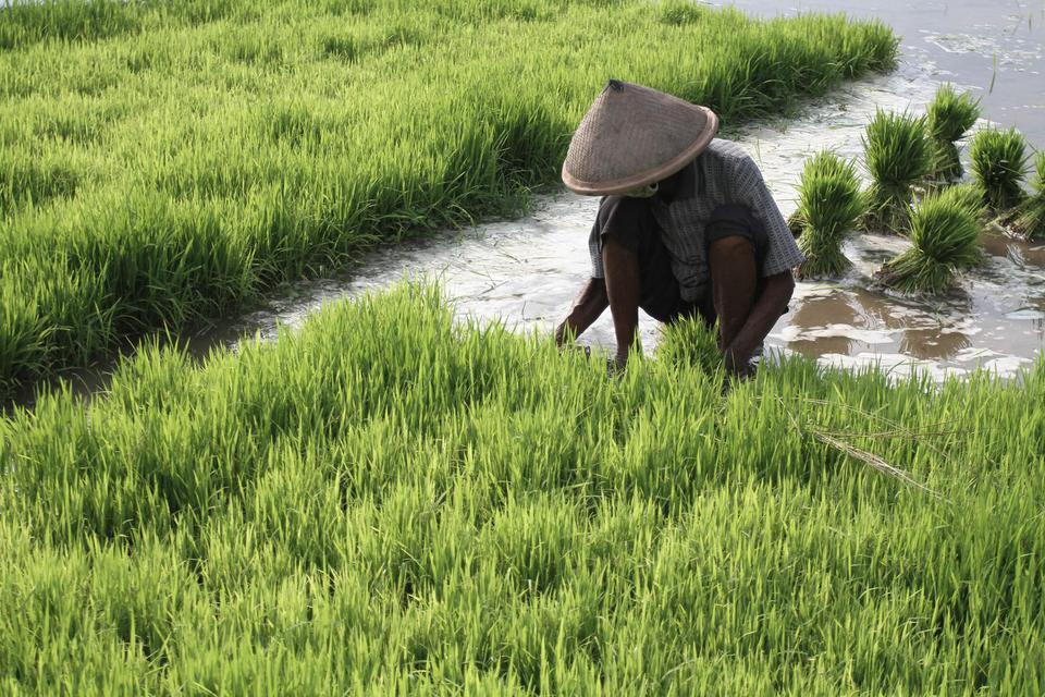Cegah Krisis Pangan, Kemendes Siapkan 75 Ribu Ha Lahan Intensifikasi.