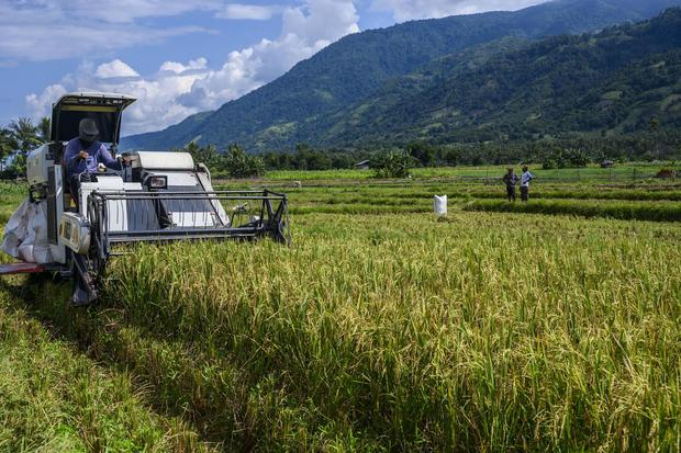 Bulog Bakal Bangun Gudang di Lumbung Pangan Kalimantan Tengah