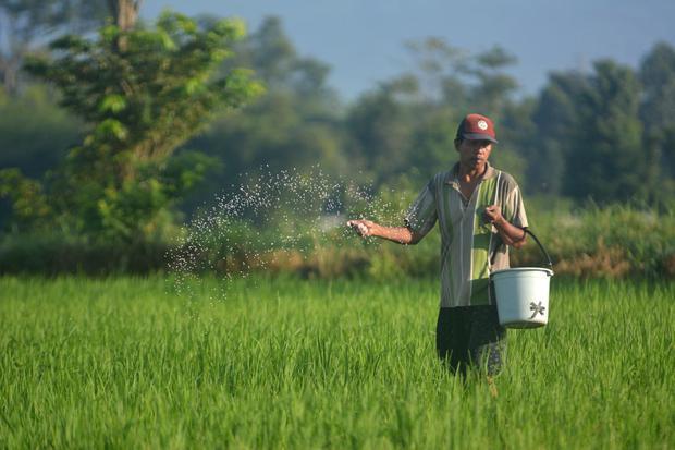 Ragam Skema Bansos untuk Petani dan Nelayan Terdampak Pandemi Corona -  Nasional Katadata.co.id