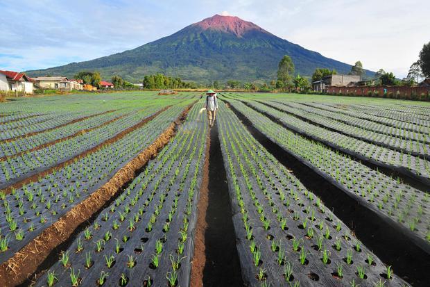 Gunung Kerinci, salah satu gunung tertinggi di Indonesia.