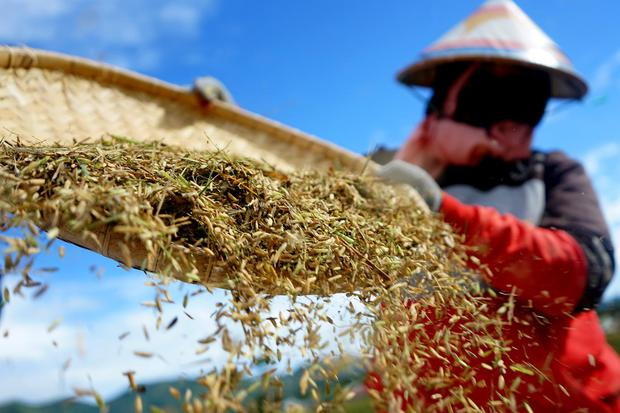 Pengamat Sebut Pertumbuhan PDB Pertanian Dampak Faktor Musiman.