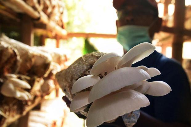 Mengenal Kingdom Fungi dan Peranannya Bagi Kehidupan