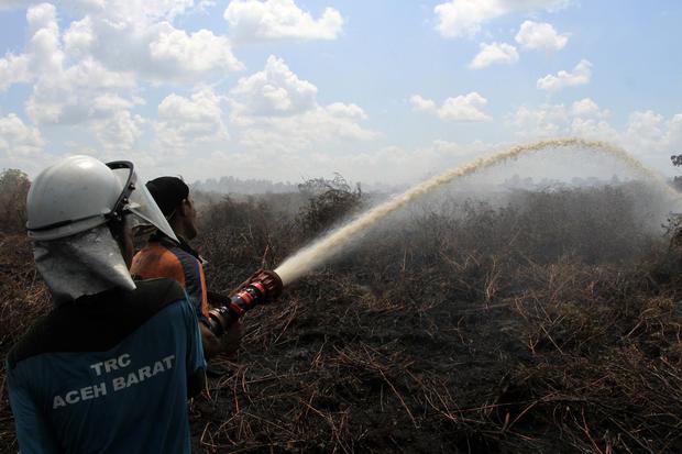 kebakaran hutan, bnpb, gambut