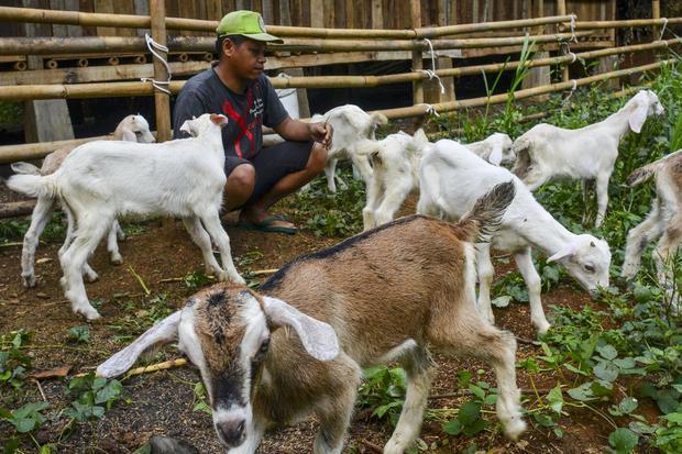 Susu kambing mengandung banyak nutrisi yang baik. Beberapa manfaat susu kambing untuk tubuh antara lain menurunkan kadar kolesterol dan tekanan darah.