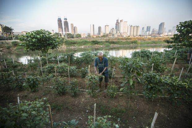 Petani di Jantung Ibukota