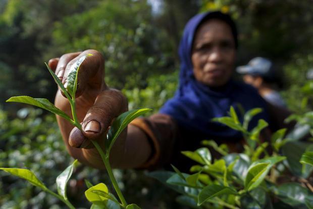 Peluang Petani Dulang Untung dari Tanaman Herbal dan Aplikasi Digital