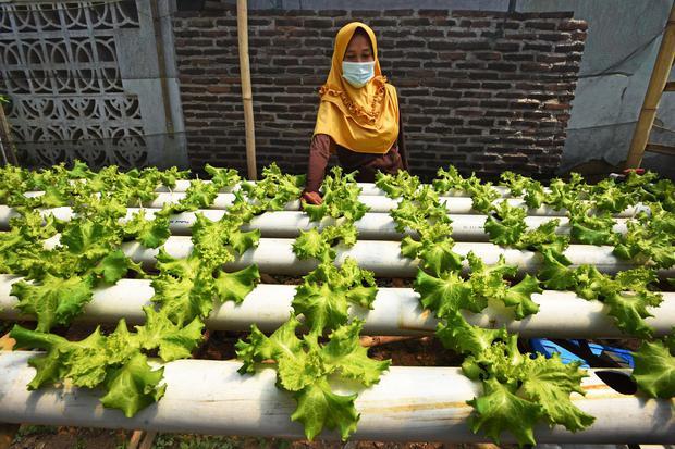 Mencari Celah Untung dari Urban Farming dan Startup Pertanian