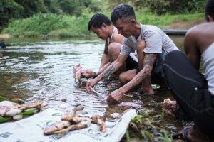 Pria-pria masyarakat adat Dayak Iban tengah beraktivitas di Sungai Utik