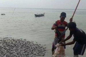 Tumpahan Minyak yang Mencemari Pulau Pari, Kepulauan Seribu, DKI Jakarta