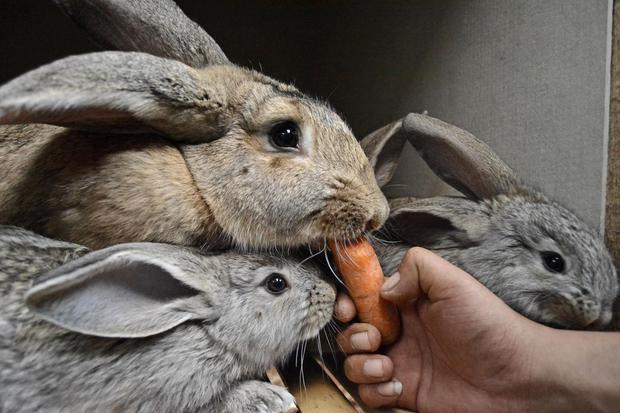 13 Makanan Kelinci yang Mudah Didapat