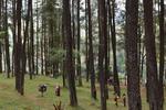 Hutan Jawa Timur