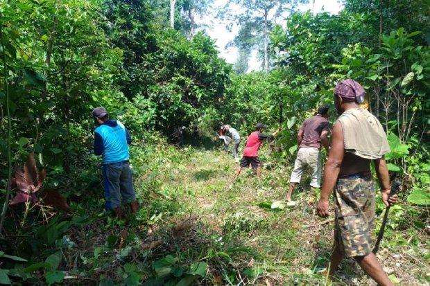 Dokumentasi kegiatan masyarakat adat Simpang Macan Luar saat berladang