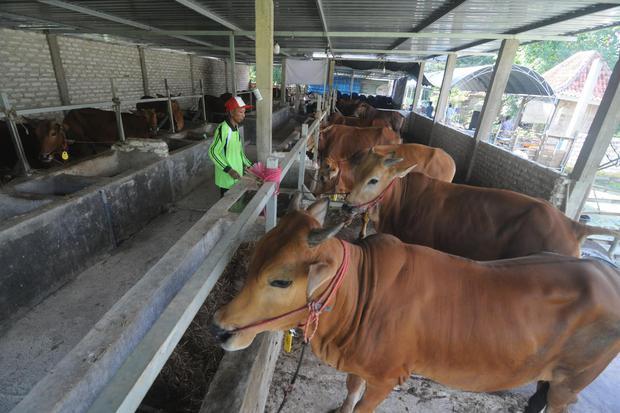 Indonesia, Belgia, hewan