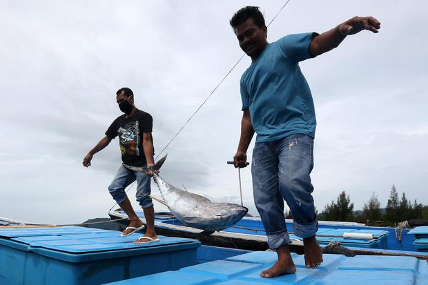 Nelayan membawa ikan tuna kualitas ekspor hasil tangkapan di Tempat Pelabuhan Ikan (TPI) Ulee Lheu, Banda Aceh, Aceh, Kamis (1/4/2021). Badan Riset dan Sumber Daya Manusia (BRSDM) Kementerian Kelautan dan Perikanan (KKP) menyebutkan dari perikanan tangka
