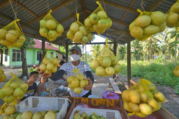 Buah lemon menjadi salah satu obat sariawan alami yang mudah didapatkan