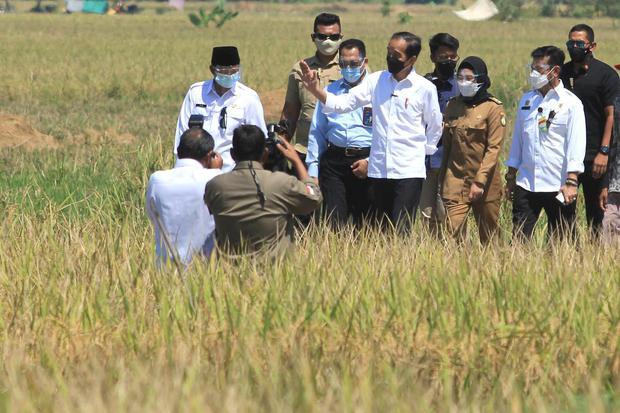 Jokowi, pertanian, papua
