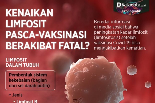 Infografik_Kenaikan limfosit pascavaksinasi berakibat fatal